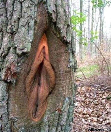 Судя по щели, дерево уже давно не деревственница, в